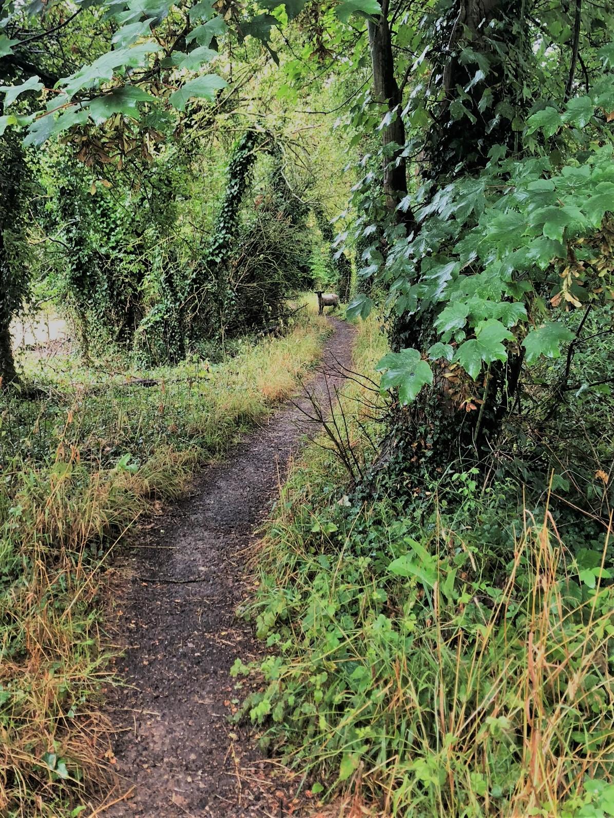 Trail Running - Mountain Need Not Apply